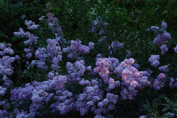 ckpoupard-flowersa143569404C-4FA1-3654-9001-9933831D5744.jpg