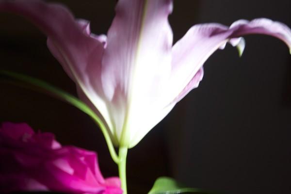 flowers-j016163B51C2-7D1E-EC3A-664C-553D51F6ECFA.jpg